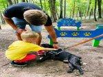 Dog Park w Starachowicach